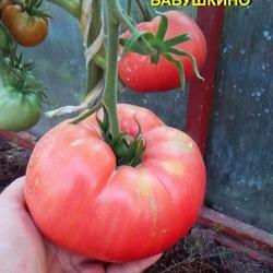 Сорт томата бабушкин подарок отзывы 35