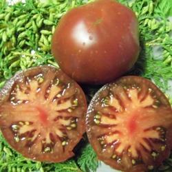 томаты сорт Купер