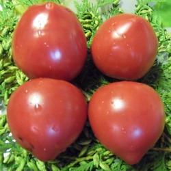 томат Перуанский домашний