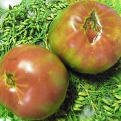помидоры сорт черный ананас фото