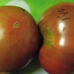 томат заржавевшее сердце Эверетта