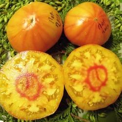 томат Полосатый господин отзывы