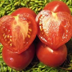 помидор сорт Перуанский домашний
