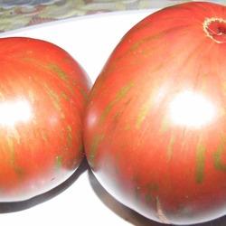 томаты для теплиц сорта