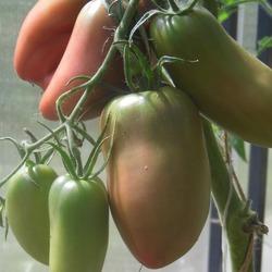хорошие засолочные томаты
