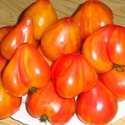 томат Оранжевый из России